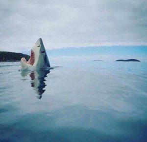 tiburon-hombre-caso001