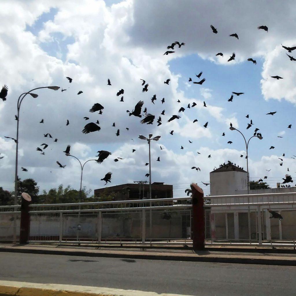 Plaza de la Revolución invadida por zamuros