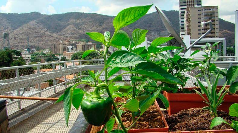 Aprueban recursos para agricultura urbana