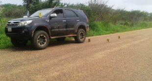 En esta camioneta transitaban los sujetos por la carretera nacional via Palenque en Las Mercedes del Llano.