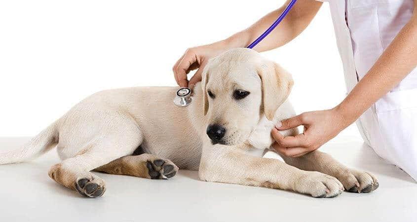 llevar al veterinario a su mascota