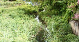 La red de aguas servidas tiene dos años obstruida