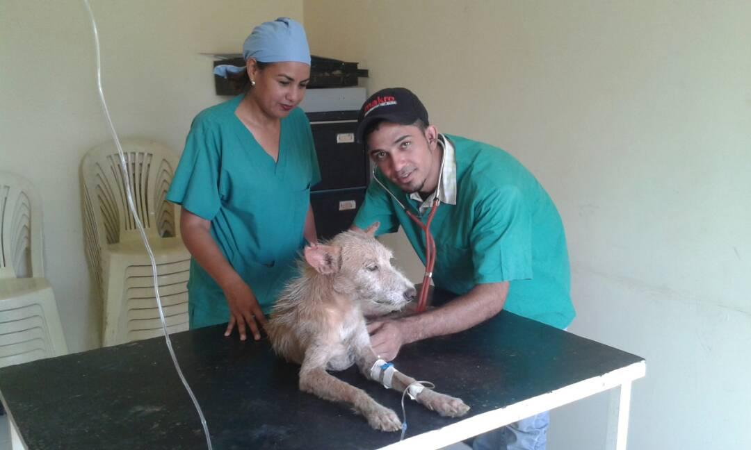 Fueron beneficiados 25 animales entre perros y gatos callejeros