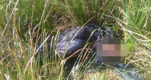 El cuerpo fue encontrado maniatado dentro de una bolsa plástica con varios disparos en su cuerpo.