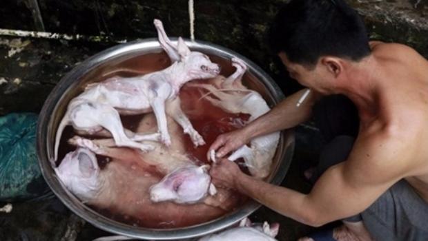 """por """"vender"""" carne de los canes y """"engañar"""" a las personas, ya que aseguraban que esa carne era de vaca,"""
