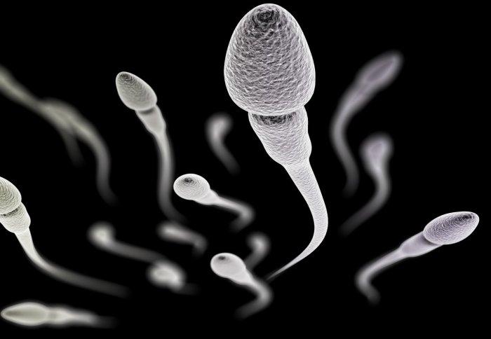 El espermatozoide logra combatir el cáncer de cérvix