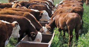 Rechazan medidas de regulación de carne y productos lácteos, productores guariqueños