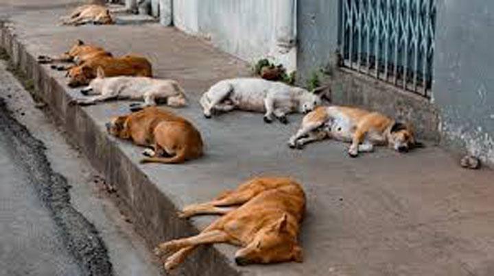 Abandono de mascotas: un reflejo de la crisis económica