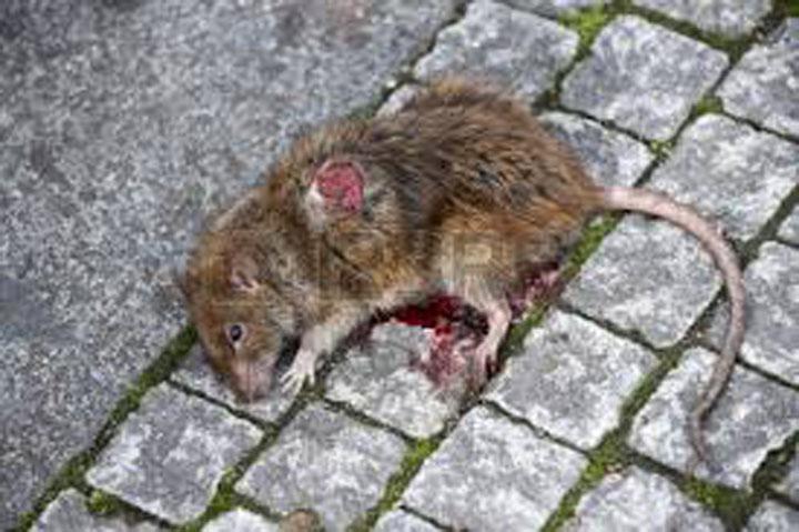 Preso del estado Bolívar come ratas para calmar el hambre