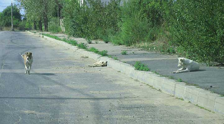 Es preocupante como cada día se ven mas animales callejeros. Esto puede desencadenar enfermedades.