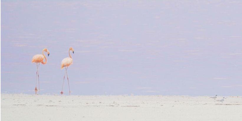 elegancia rosa, fiesta del flamenco