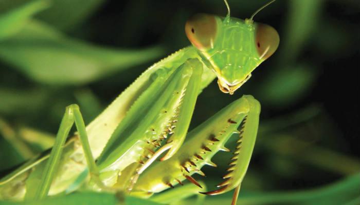 El sexo representa un gran costo para los insectos