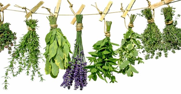 Las plantas alternativas