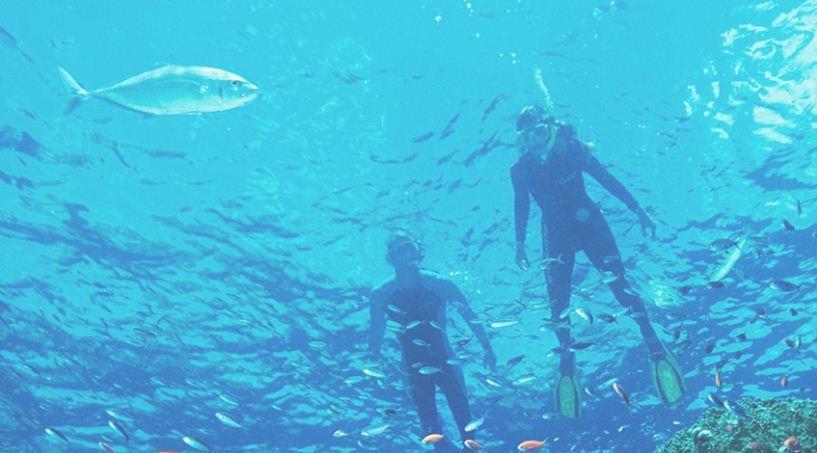 Submarinismo, Snorkel actividades comunes en La Gran Barrena
