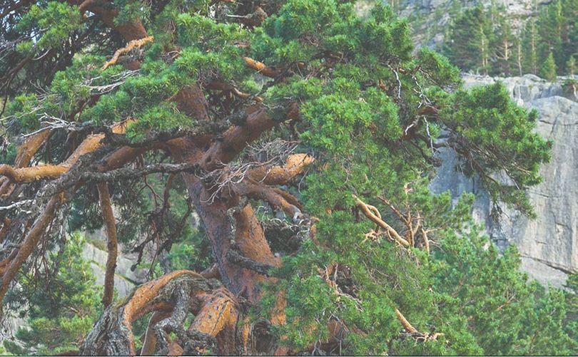 Entre pinos y rocas los senderos avistan la Laguna Negra de Soria