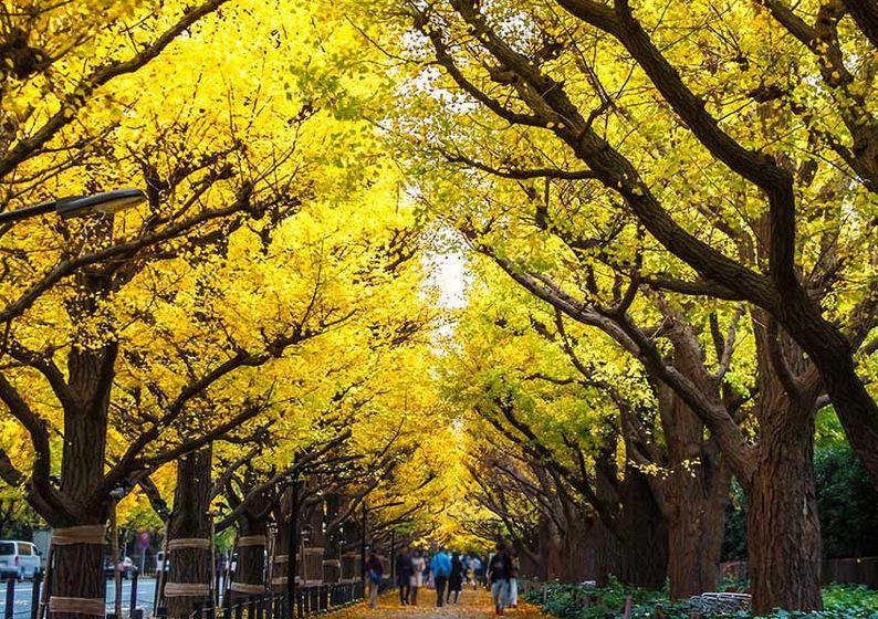 Meiji Lingu Gaien, Tokio