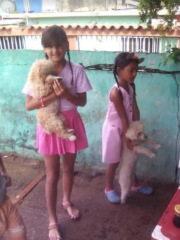 Muchos perros necesitaban las vacunas correspondientes