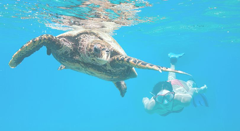 Nadar entre tortugas gigantes en el mar de Seychelles