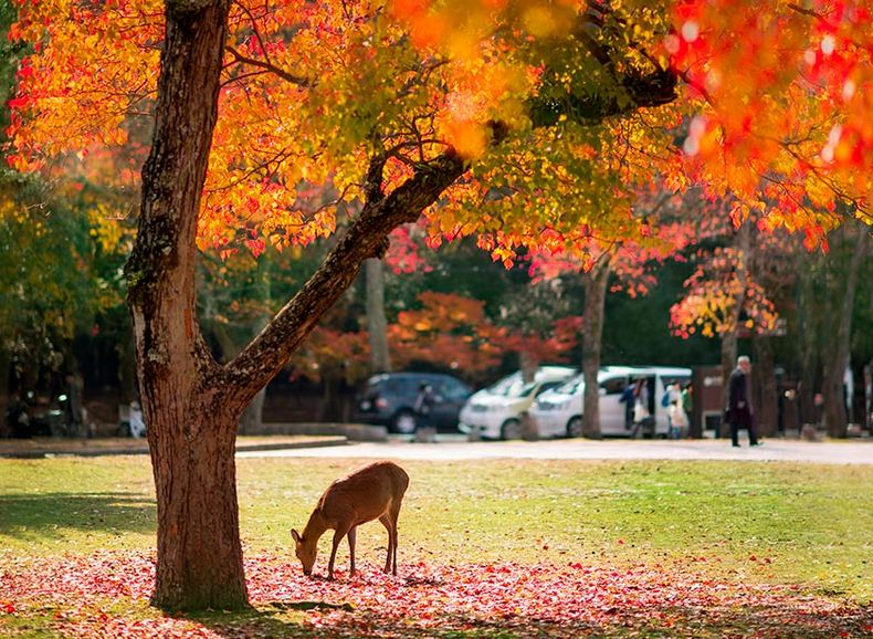 Parque de Nara, Nara