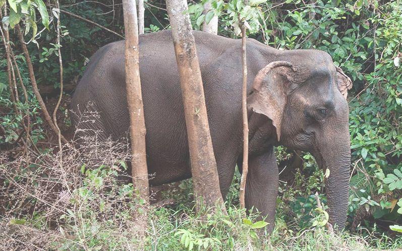 El santuario de los elefantes en Camboya.