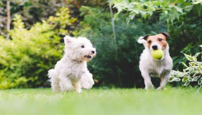 Las personas no saben es que le hacen un gran daño a sus mascotas al tratarlos como humanos