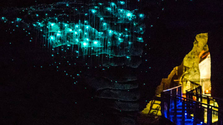 Las Cuevas de Waitomo en Nueva Zelanda. Espectáculo de luces y magia