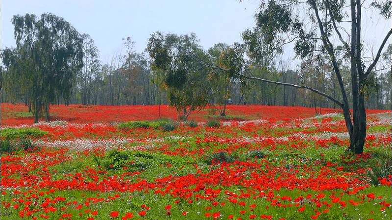 Los pasto floridos de Darom Arom