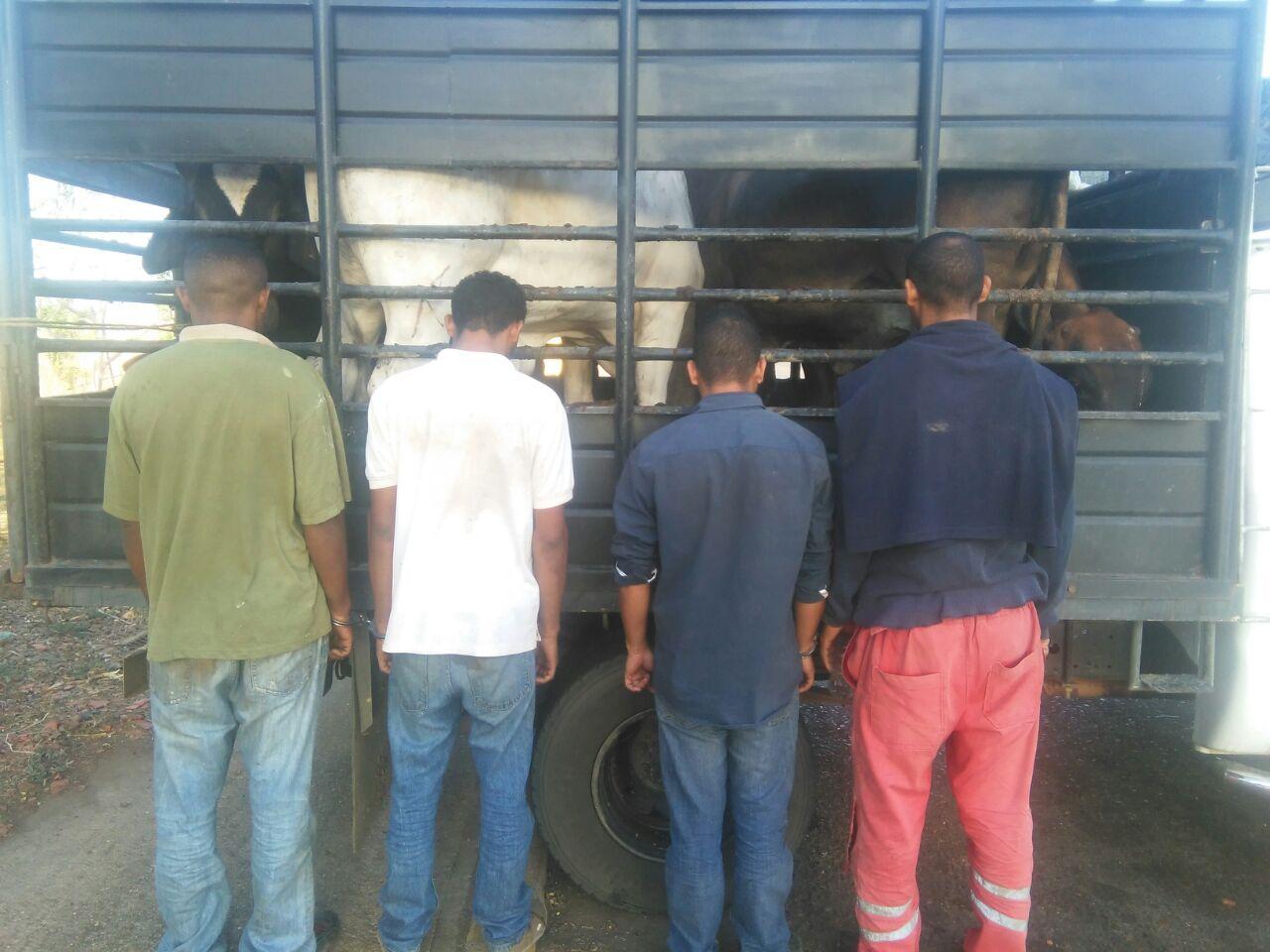Los cuatro sujetos quedaron a la orden del MP, por el delito de hurto de ganado