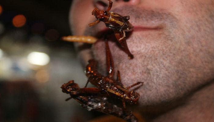 Los escarabajos representan cerca del 25% de las especies conocidas de insectos