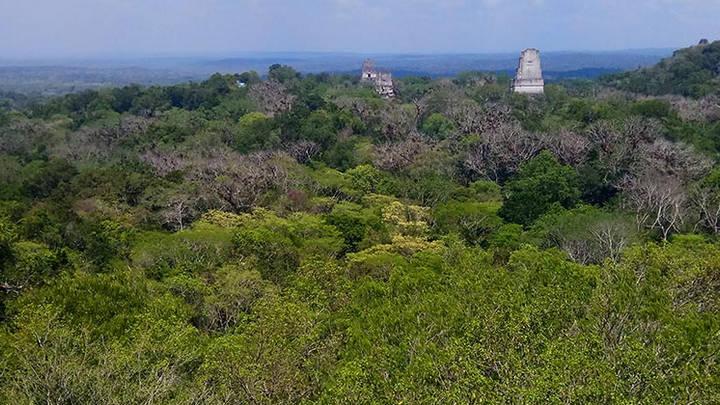 Tikal, de los mayas en Guatemala para el mundo