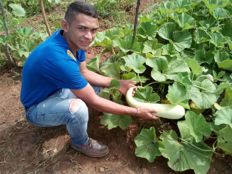 Futuros ingenieros de agroalimentaci_n cosechan calabacines en sus proyectos